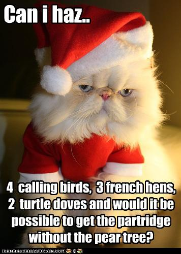 funny birds. funny-pictures-cat-asks-for-