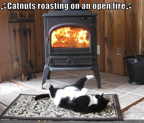 Christmas is coming soon. Funny-pictures-cat-roasts-by-fire